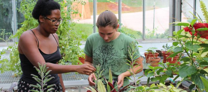 Summer research in the greenhouse