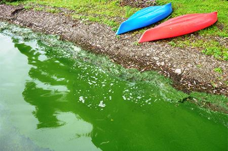 Photo of harmful algal bloom in water next to canoes on shore