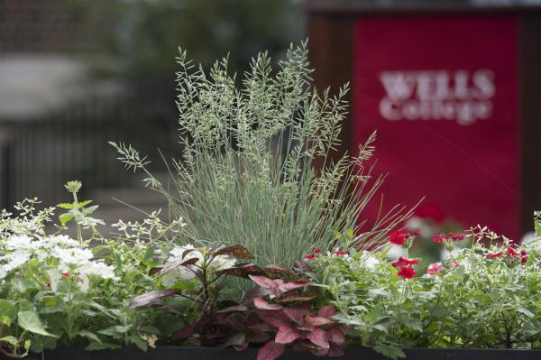 plants in front of commencement lectern