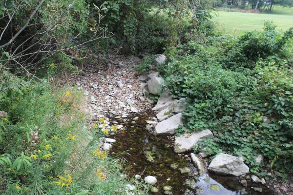 grassy bank and brook on campus