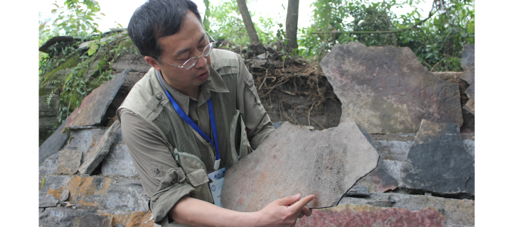dr. xiao pointing out fossil evidence in a rock