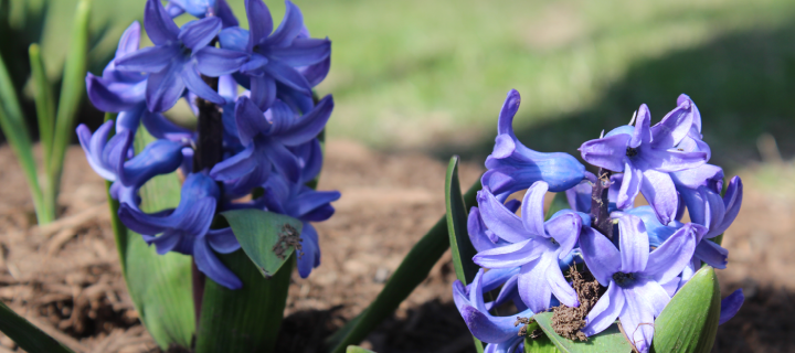 photo of flowers on the wells campus
