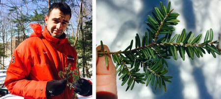 student with branch holding hemlock woody adelgid