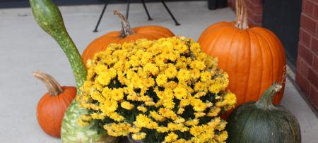 mums and pumpkins on the steps of the library