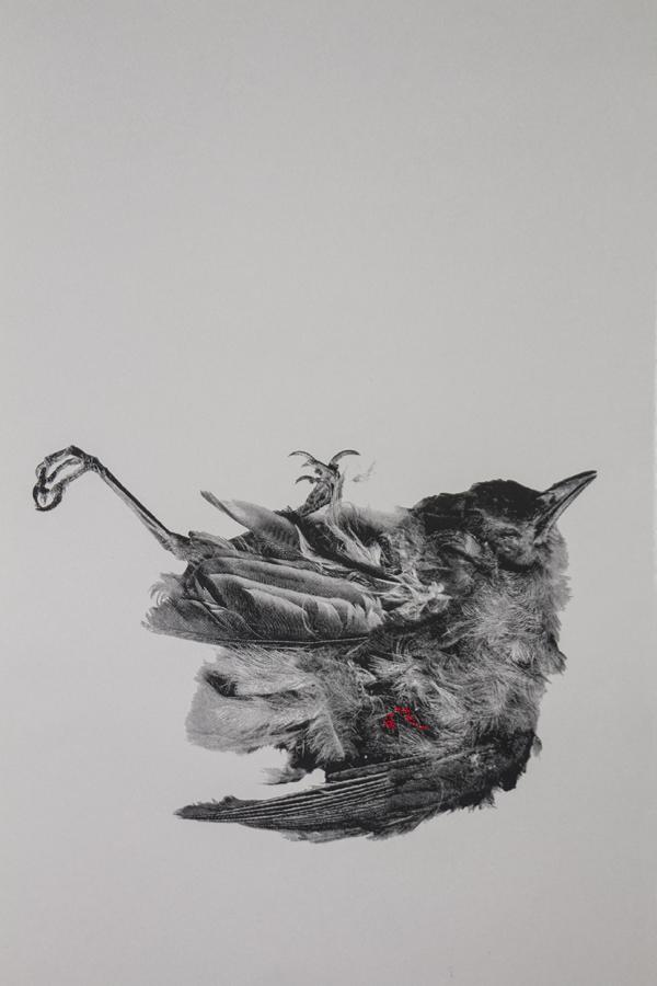 screenprint picture of dead starling by Jenna Rodriguez